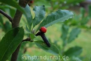 magnolie_3