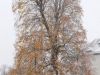 ploetzlich_winter