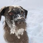 verschneite Leila